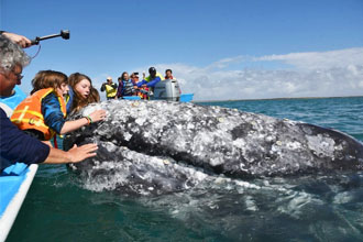 touch the whales in mexico