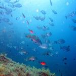 Benidorm underwater life
